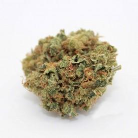 Critical - Cannabis Sativa L