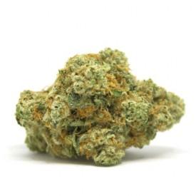 BZ1 - Cannabis Sativa L